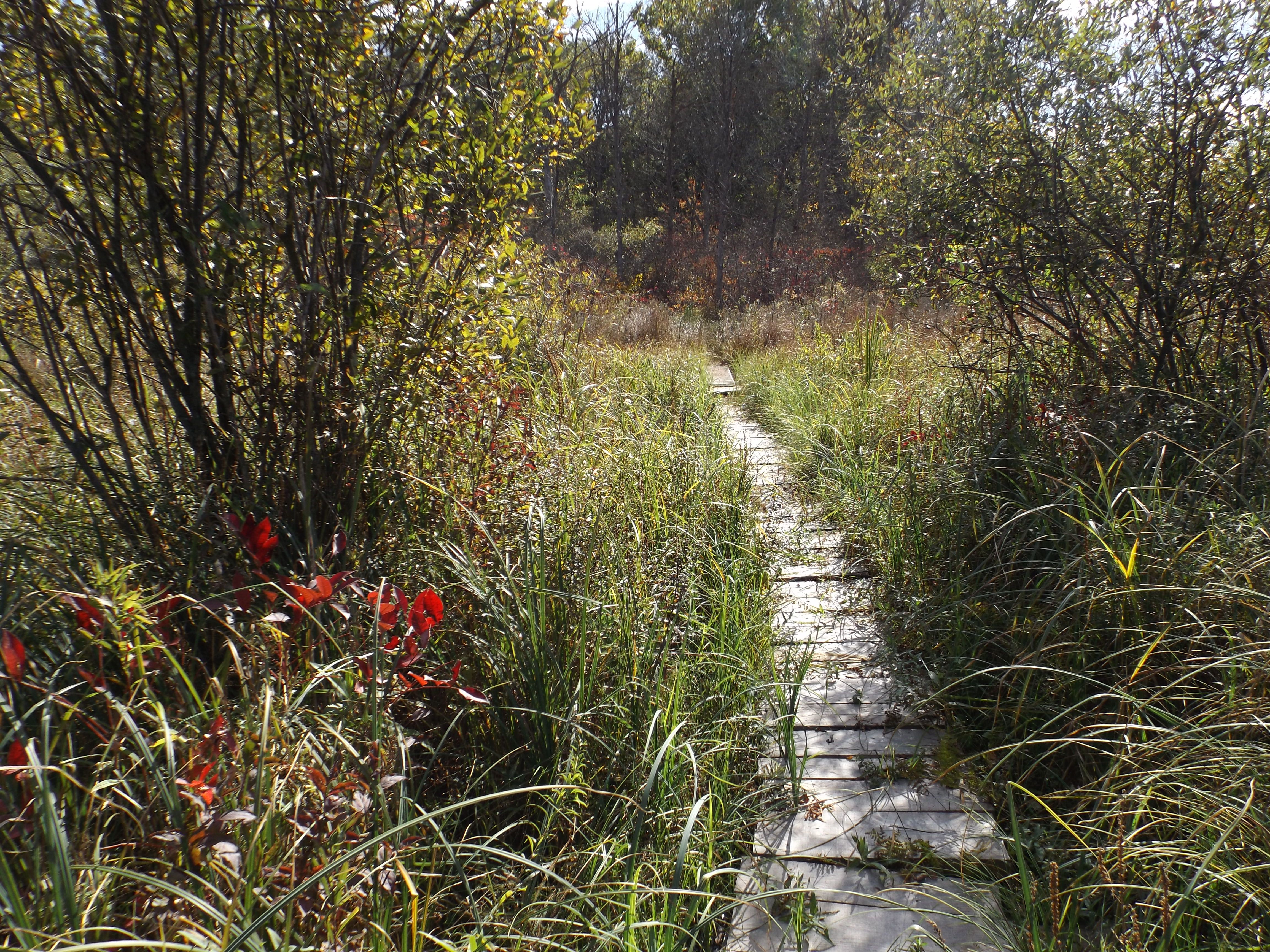 Fen Boardwalk at Camp Friedenswald