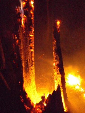 Burnning tree #1 at Camp Friedenswald
