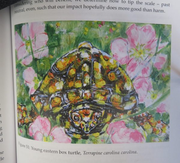 Illustration of an eastern box turtle, from the book A Year on Turtle Hill, by Susie Huser.